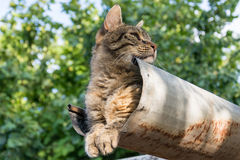 Tabby calm cat sitting on the shiver roof.  Royalty Free Stock Image