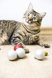 Tabby cat. With christmas decoration royalty free stock photography