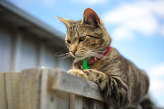 Tabby cat. Cute black and brown tabby cat lying on fence royalty free stock photo