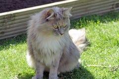Tabby cat Stock Photography