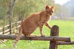 Tabby Cat Imágenes de archivo libres de regalías