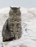 Tabby Cat. With green eyes sitting on rocks stock photos