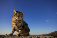 Tabby cat against blue sky Royalty Free Stock Photography