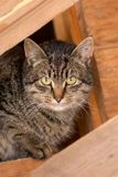 Tabby cat in the attic of a wooden house stock photography