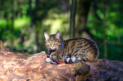 Tabby cat in the back like a jungle forest green. Tabby cat in the back like a jungle forest Royalty Free Stock Image