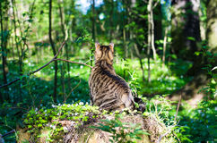 Tabby cat in the back like a jungle forest green Stock Images