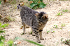 Tabby Cat. Brown tabby cat in the garden. Selective focus stock image