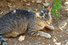 Tabby Cat. Brown tabby cat lying in a garden. Selective focus royalty free stock photography