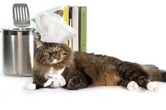 Tabby Cat Chef. A well fed brown tabby cat with green eyes wearing chefs hat and neckerchief laying in front of stainless steel stock pot holding kitchen royalty free stock photography