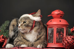 Tabby cat in a Christmas  hat Royalty Free Stock Photography