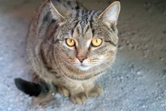 Cat with yellow eyes royalty free stock images