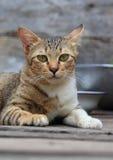 Tabby cat. Close up tabby cat face stock photos