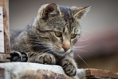 Tabby cat close up. Selective focus stock images