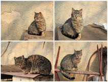 Tabby cat collage Stock Photo