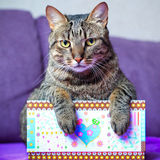Tabby cat with a colorful box Royalty Free Stock Photos