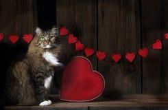 Tabby Cat con Valentine Hearts Imagen de archivo