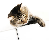 Tabby cat on the cupboard Stock Photos