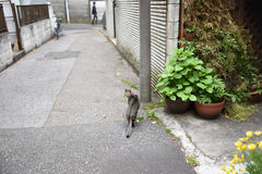 Tabby cat in downtown in Tokyo Royalty Free Stock Photos