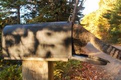 Tabby Cat in einem Briefkasten Lizenzfreie Stockfotos