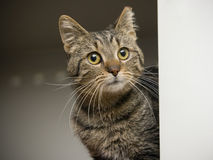 Tabby cat with empty space Stock Photos