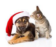 Tabby Cat et chien avec le chapeau de Santa Claus sur le blanc Images stock