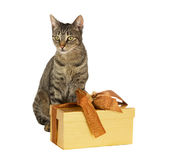 Tabby cat with festive gift Royalty Free Stock Images