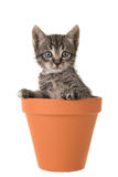 Tabby cat flower pot stock photo