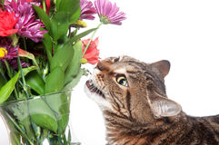 Tabby cat and flowers Stock Photos