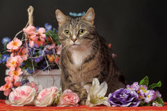 Tabby cat and flowers Royalty Free Stock Photography
