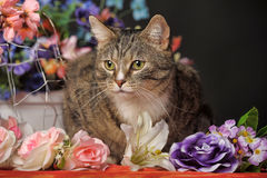 Tabby cat and flowers Royalty Free Stock Image