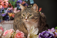 Tabby cat and flowers Royalty Free Stock Images