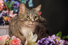 Tabby cat and flowers Royalty Free Stock Photo