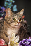 Tabby cat and flowers Stock Photography
