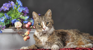Tabby cat with flowers Stock Images