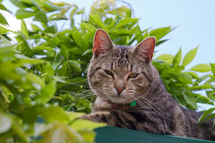 Tabby cat in garden. A cute tabby cat in the garden royalty free stock photos