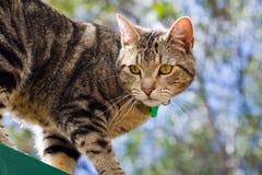 Tabby cat in garden. A cute tabby cat in the garden stock photo