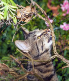 Tabby cat in the garden Royalty Free Stock Photos