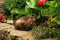 Tabby cat in garden Stock Images