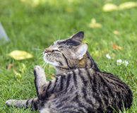 Tabby cat in the garden royalty free stock photos