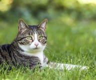 Tabby cat in the garden stock image