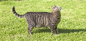 Tabby cat in the garden Stock Photos