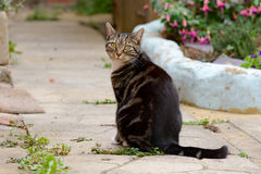 Tabby cat in garden Stock Photo