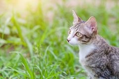 Tabby cat in the grass Royalty Free Stock Image