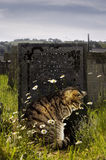 Tabby Cat by Gravestone. Contrasty image of Tabby cat sitting by gravestone Stock Image