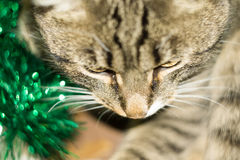 Tabby Cat and Green Tinsel Stock Images