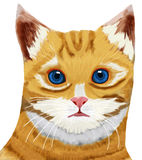 Tabby cat head blue eye. Digital drawing painting tabby yellow cat head blue eye white background Stock Image