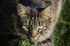 Tabby cat. Head shot on grass Stock Image