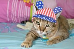 Tabby Cat i amerikanska flagganhatt Arkivfoton