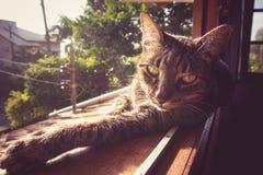 Tabby Cat i solen Arkivfoton