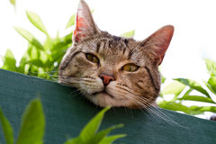 Free Tabby Cat In Garden Stock Images - 17031634